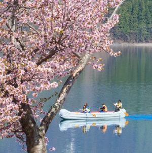 桜Eボートクルーズ