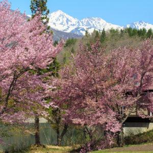 桜MTBファンライド
